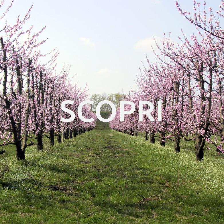 Scopri - Bassa Romagna Mia