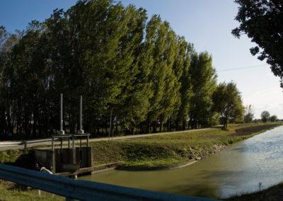 Alfonsine riserva naturale