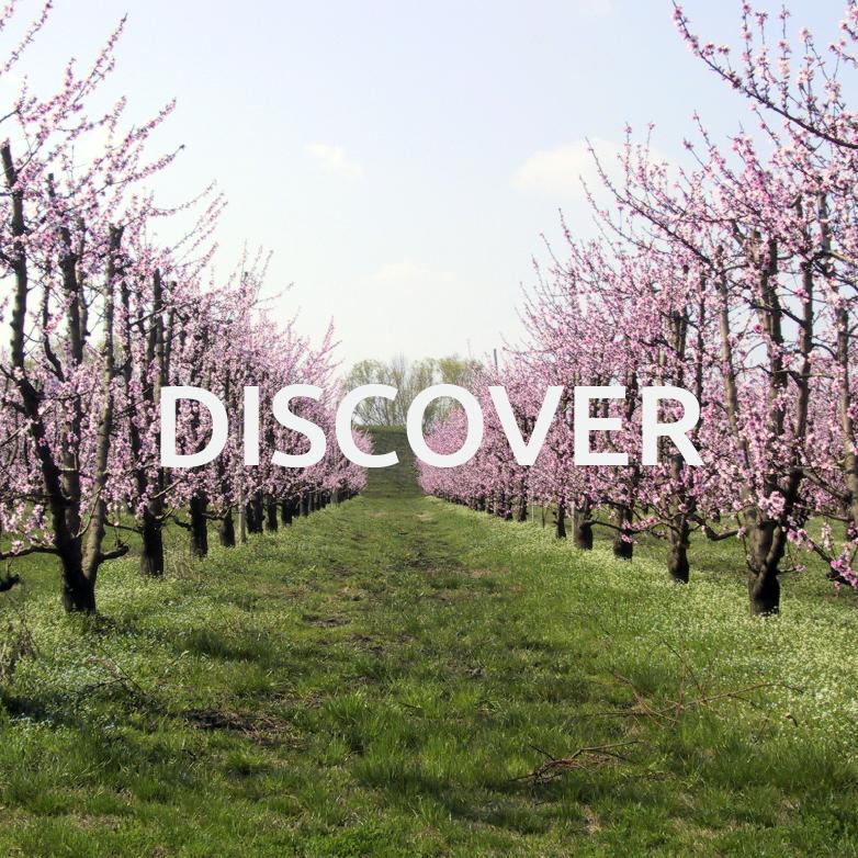 Discover - Bassa Romagna Mia